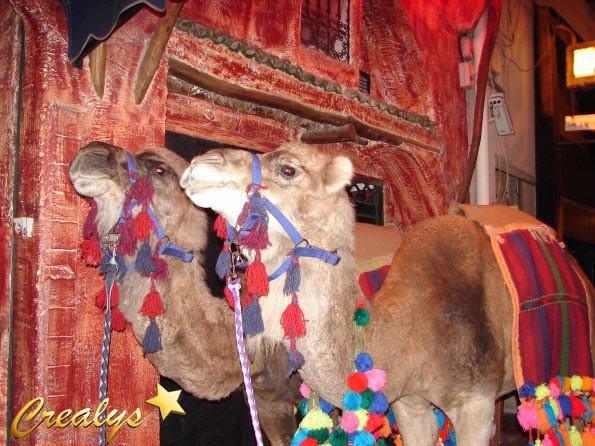 dromadaire et chameau prestation dromadaire louer pour votre soire mariage - Location De Chameau Pour Mariage